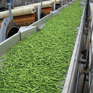 Key Technology vibratory conveyor for green beans