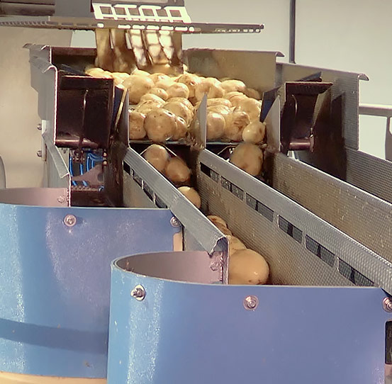 FastBack FastLane feeding potatoes to slicers