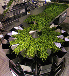 Green beans on multihead weigher