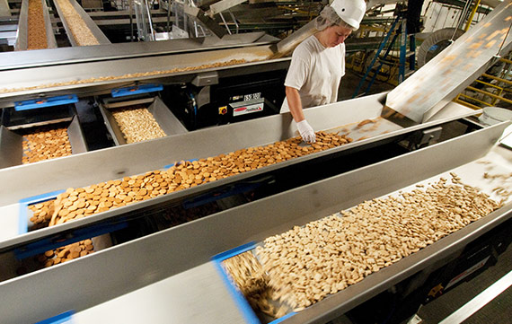 Heat and Control conveying systems for cookies