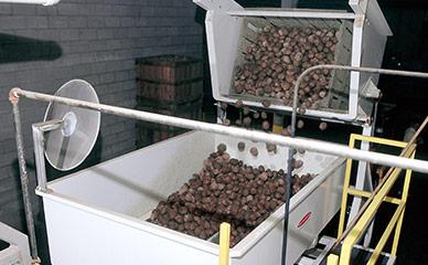 Potato handling machinery for kettle chips