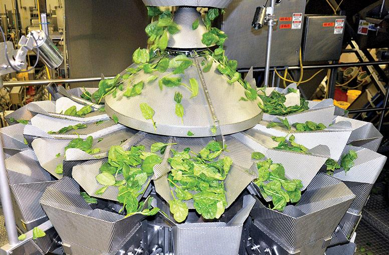 Ishida CCW weigher with Rotary Sweeper for salad application